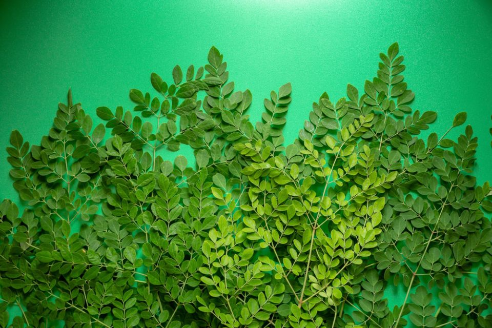 efek samping daun kelor