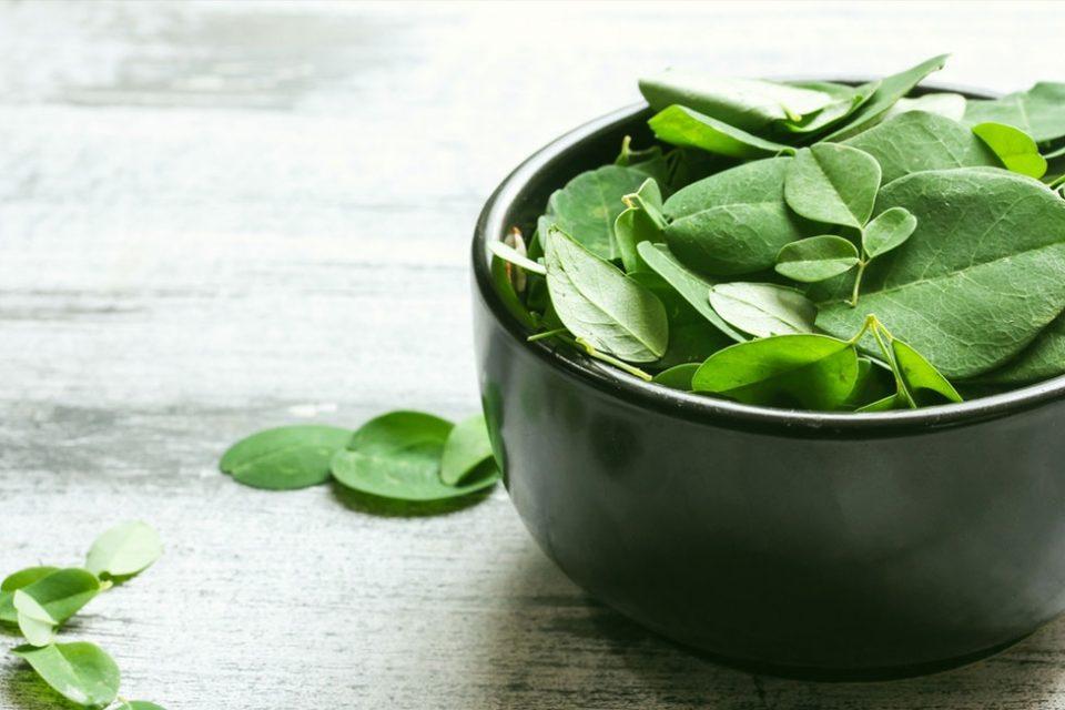 cara mengolah daun kelor untuk asam urat