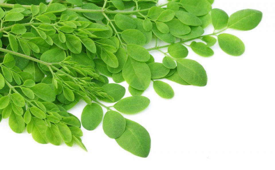 cara memasak daun kelor