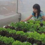 Jenis Makanan dan Manfaat Biotin-IGhidroponikcantik